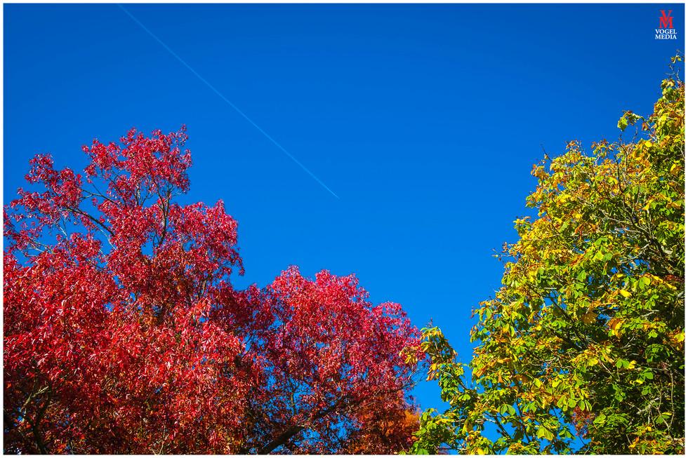 Vapour trails above auckland in Autumn...
