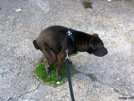 Dogs Poop With the Pull of the Earth