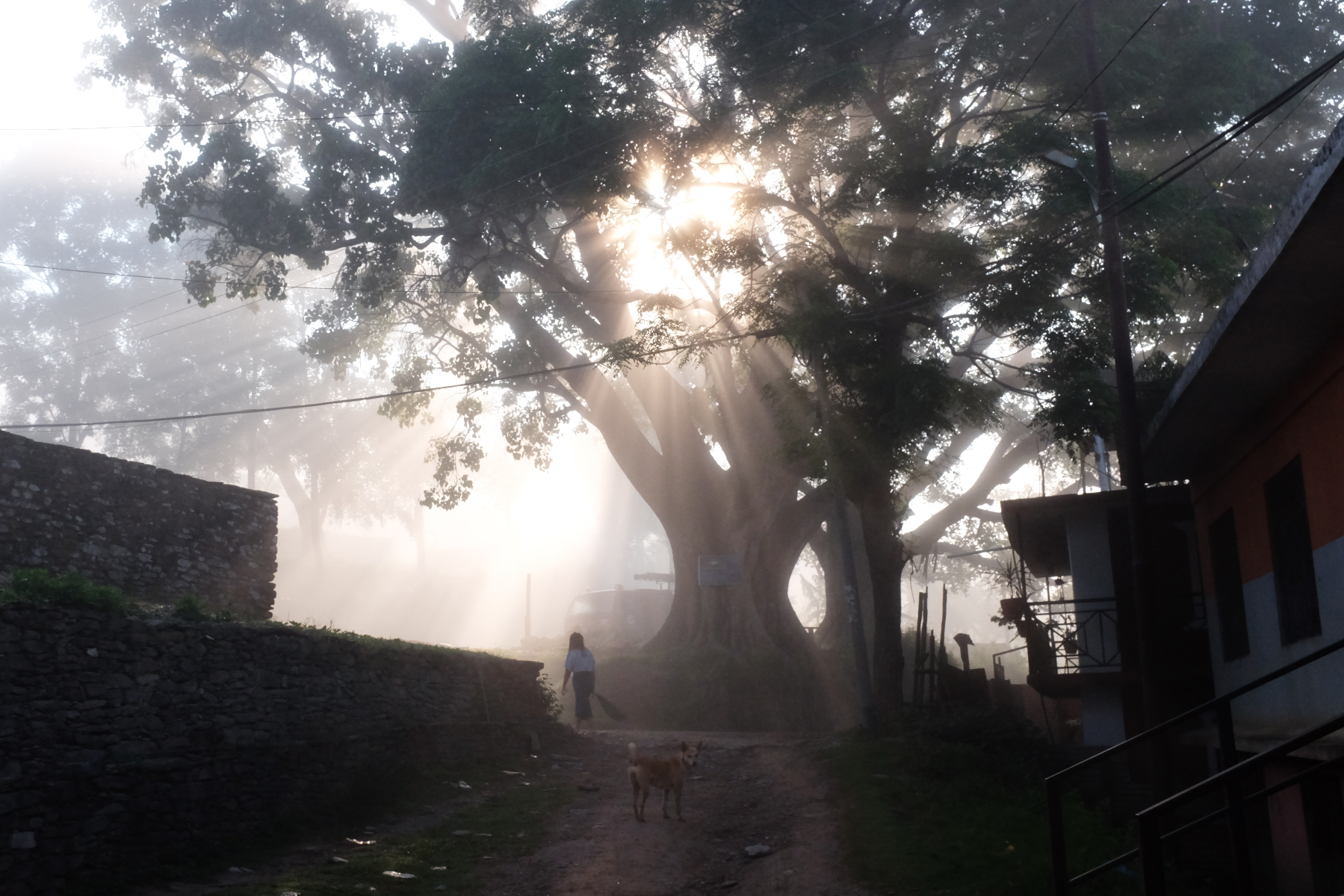 An ancient tree in front of the local elementary school, Bandipur, Nepal, 2018