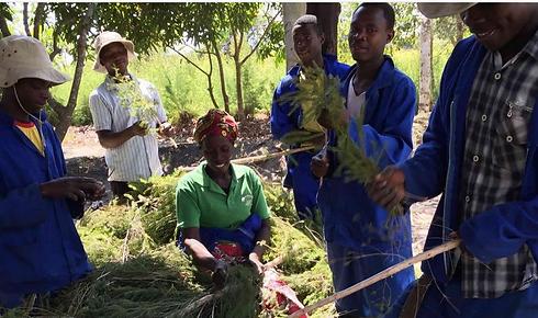 Tea Tree Growers.png