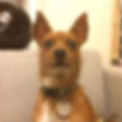 dog_pic-300x300.jpg