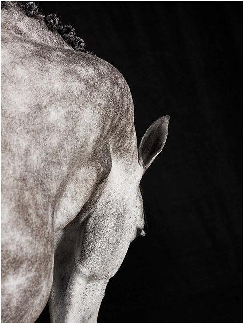 Crawssina Lines_Horse Series_2016_Juan Lamarca