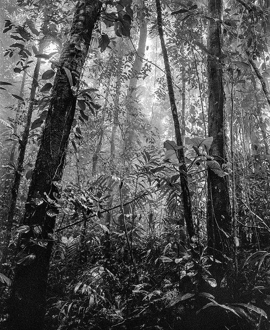 Bosque Tropical Húmedo II Nuquí, Silver Gelatin Print, 2021 Miguel Winograd