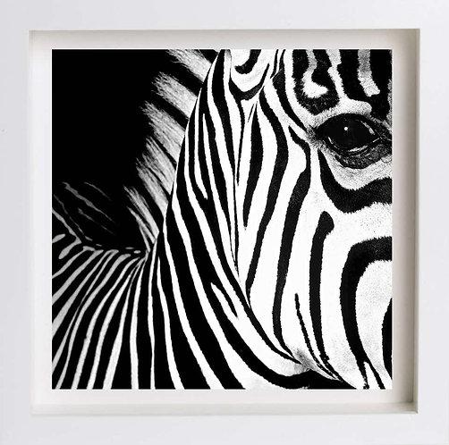Half Angels Half Demons - Zebra #26 (Framed), 2008 (B&W)