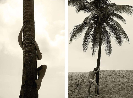 Palm Climb One, and Man and Palm Tree. Set, 2017 - 2018 (Sepia)