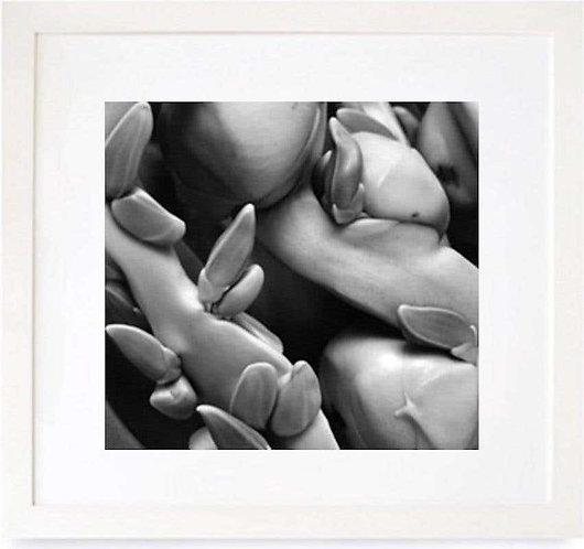 Coconuts (Framed), 2000 (B&W)
