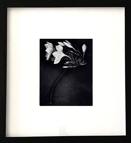 Orchid, 1988