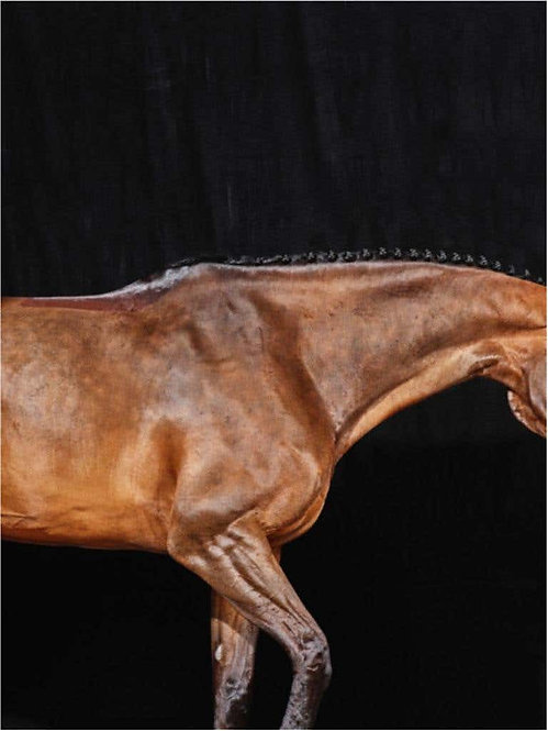 Caballito II_Horse Series_Small Archival Pigment Print_2016_Juan Lamarca
