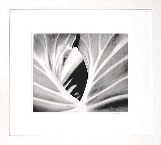 The Leaf (Framed), 2000 (B&W)
