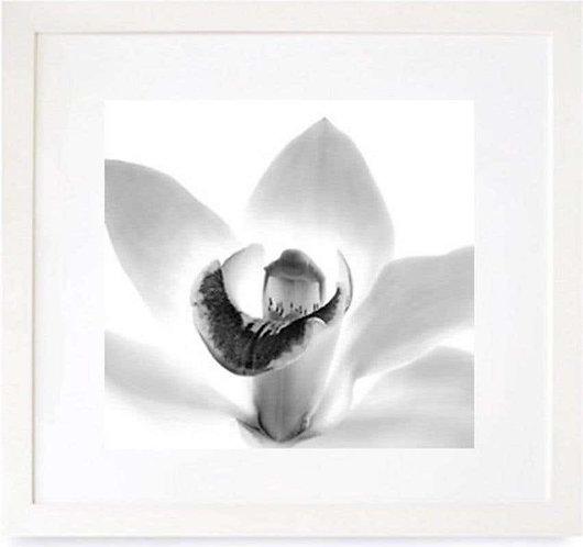 Orchid (Framed), 2000 (B&W)