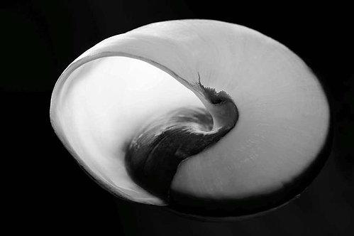 Nautilus, Seashell_Black & white archival pigment print_Kiko Kairuz