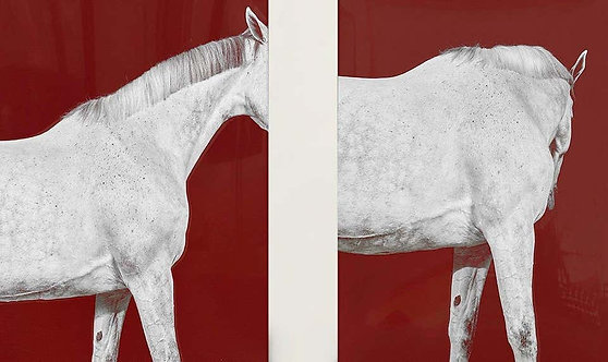 Tixie on Red I and II Diptych_Horse Series_Small Archival Pigment Print_2016_Juan Lamarca