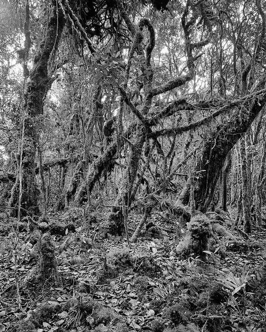 Bosque Alto-Andino II Charrascal, 2021 Miguel Winograd