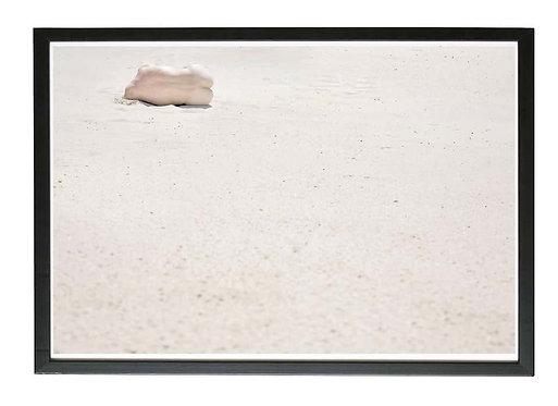 The Seed / Desert Flower – Italy (Framed), 2014