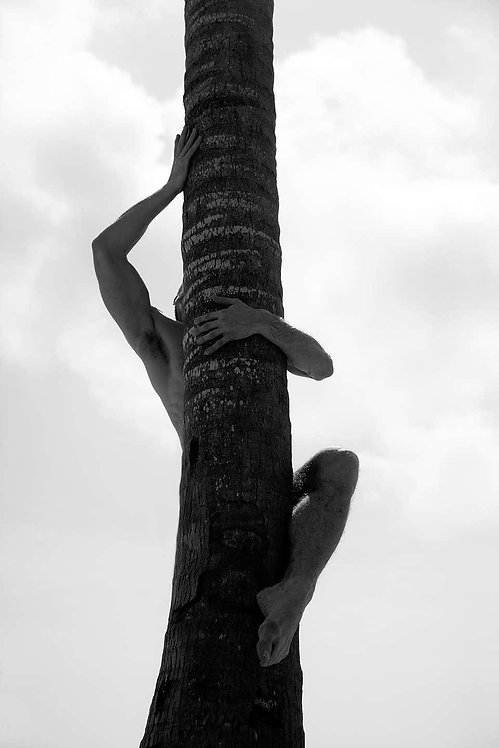 Palm Climb Two, 2017 - 2018 (B&W)