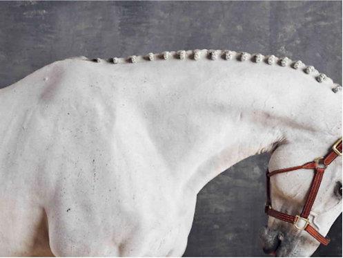 Titan Neck II_Horse Series_2015_Juan Lamarca