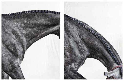 Optimistic I and II, Set from Horse Series, 2019
