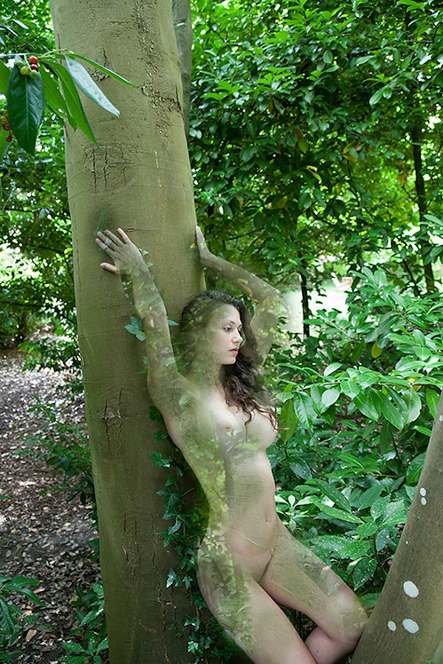Women and Trees VII, 2020