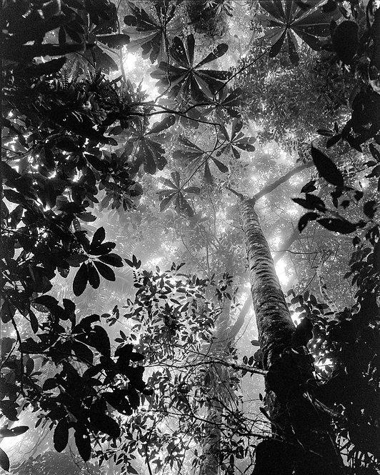Bosque Tropical Húmedo Nuquí, Silver Gelatin print 2021 Miguel Winograd
