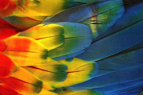 Plumas Colores - Guacamaya, 2018