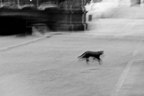 Lucky Shadows_Black and White Photography_1999_Sebastián Palomo Danko