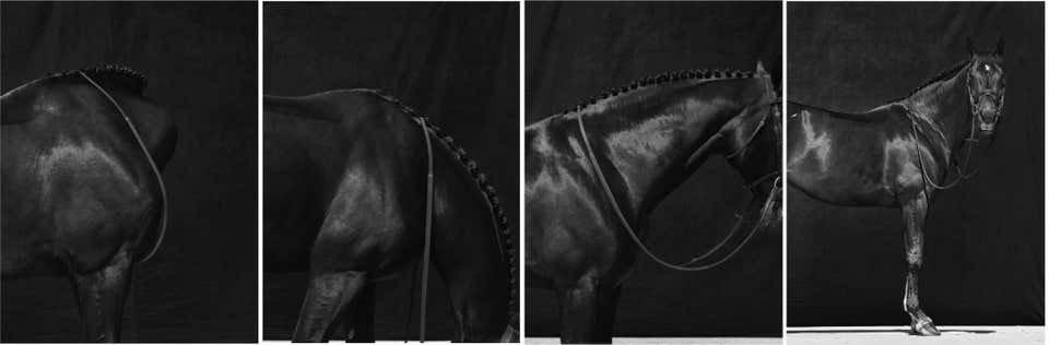Brainpower_Set from Horse series_2018_Juan Lamarca