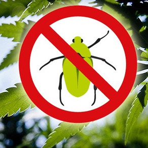 Control biológico sin Agrotóxicos