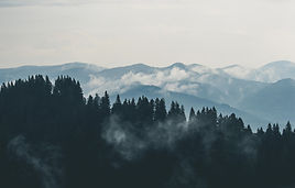 clouds-fog-forest-9754.jpg