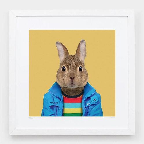 Zoo Portraits: Pedro, the European Rabbit