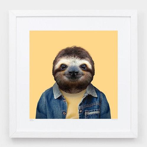 Zoo Portraits: João, the Brown-throated Sloth