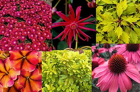 March Newsletter (Plant Sale).jpg