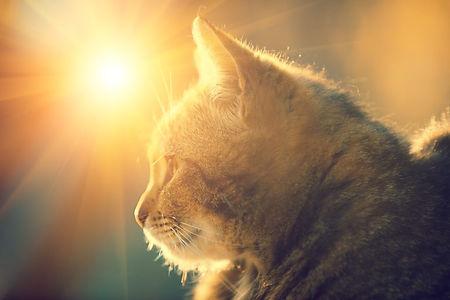 Energy-cat-1024x683.jpg