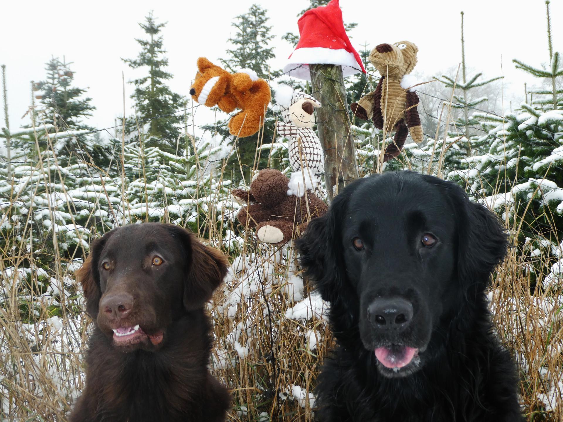 """"""" Ob uns der Weihnachtsmann wohl neues Spielzeug bringt…… """""""