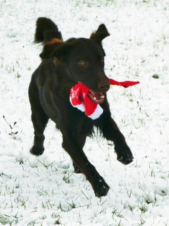 Erster Schnee für Xavy