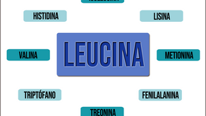 Leucina, Aminoácido esencial