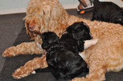 Ever patient Zita and the pups
