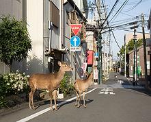 photo yoko Ishii pour affiche et flyer 2021.JPG