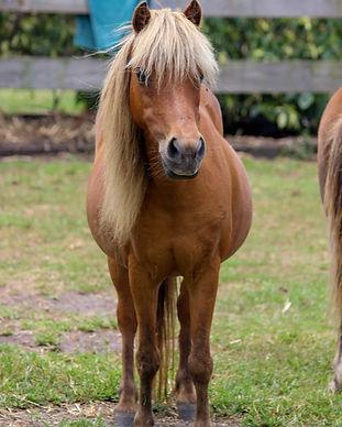 grace pony.jpg