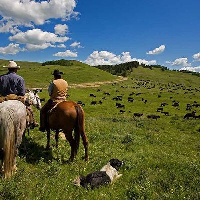 Cattle%20Herders%20_edited.jpg