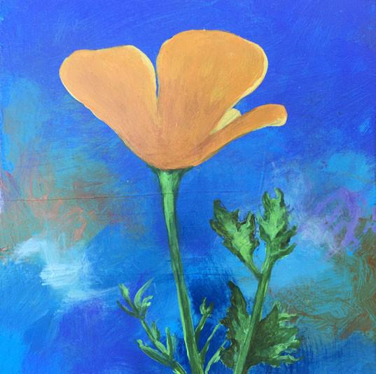 California Poppy- Judith Dauncey