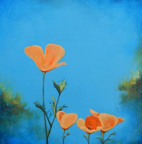 Poppies- Judith Dauncey