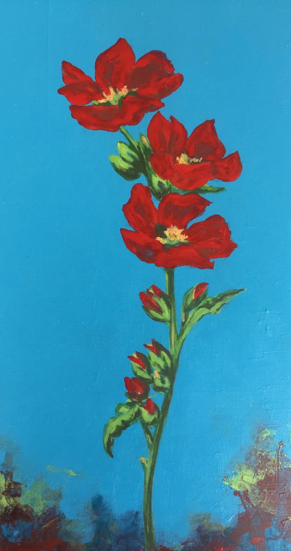 Red Poppies- Judith Dauncey