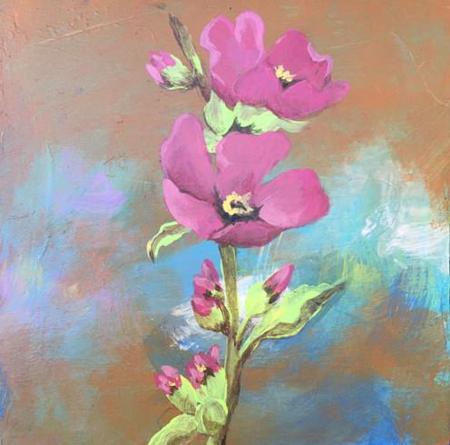Pink Poppy- Judith Dauncey
