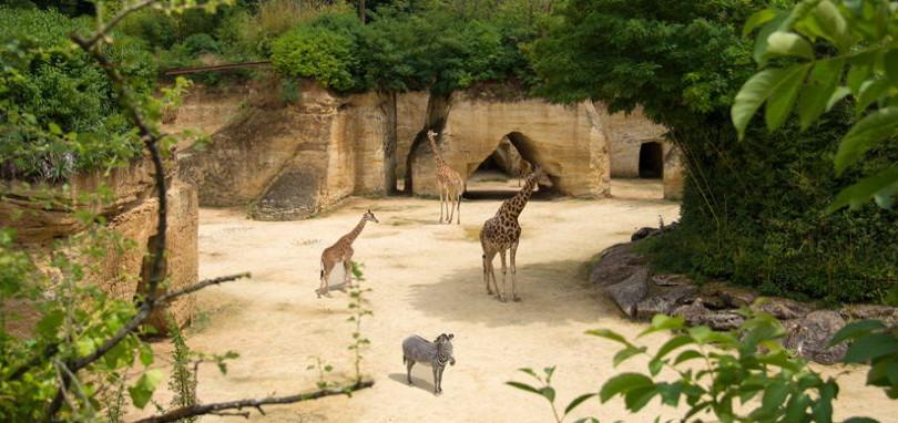 Zoo BioPark à Doue La Fontaine. À seulement 20 minutes en voiture et plus de 1200 animaux vivent dans un cadre troglodytique unique