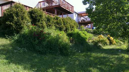 Hillside before mulch