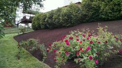 Hillside after mulch