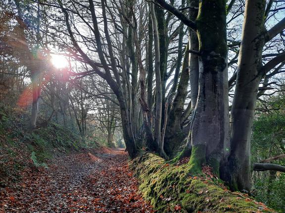 Sidmouth Circular Walk via Salcombe Woods