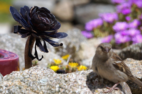 Scillies flora and fauna