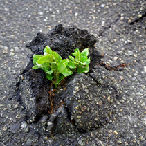 Are you resilient enough to get through Q4?