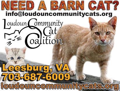 Loudouncommunitycat.jpg